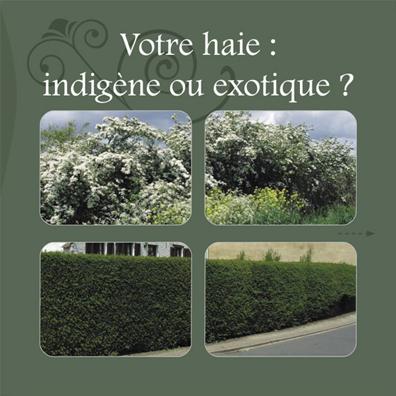 coverindigene-exotique